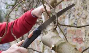 Бороздование на деревьях, когда и как проводить