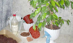 Как использовать сосновую кору для комнатных растений