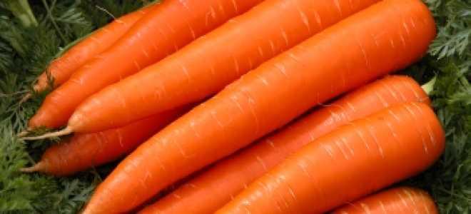 Урожайность моркови: с 1 га, с сотки, урожайность различных сортов моркови
