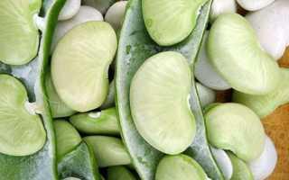 Фасоль лима: фото, условия выращивания, уход и размножение