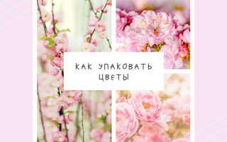 Цветы в бумажной упаковке фото