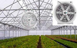 Проветривание теплицы: технология автоматической вентиляции в сооружениях из поликарбоната и промышленных