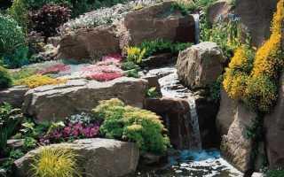 Каменистый сад. Растения для каменистого сада