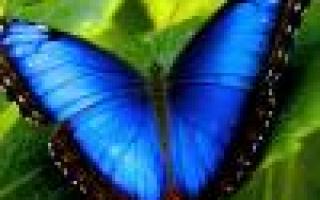 Совместимость растений на грядке, аллелопатические отношения