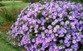 Многолетники зимующие в открытом грунте: каталог, красивоцветущие луковичные, травянистые зимостойкие цветы для дачи