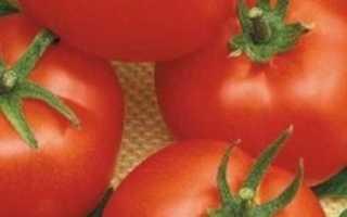 Томат Айсберг: особенности сорта, описание, урожайность, отзывы тех, кто сажал, фото