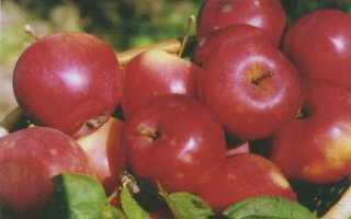Яблоня южноуральское описание фото