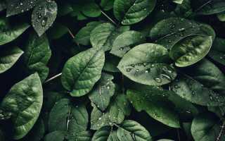 Значение воды в жизни растений.