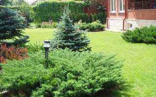 Подкормка хвойных. Удобрения для хвойных растений