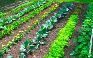 Как правильно разбить сад и огород схемы