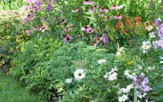 Размещение и выбор растений в смешанном бордюре