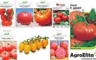 11 голландских сортов томатов для открытого грунта и теплиц – самые лучшие помидоры селекции Голландии