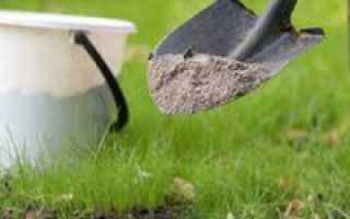 Удобрение для сливы: разновидности, сроки внесения и особенности