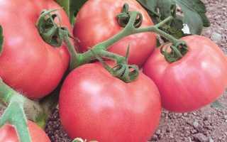 """Томат """"Розовое чудо F1"""": описание сорта и фото, рекомендации по выращиванию"""