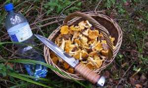 Где можно собирать грибы и как правильно это делать
