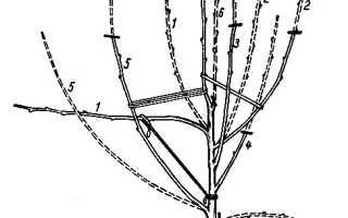 Выбор и создание форм кроны яблони