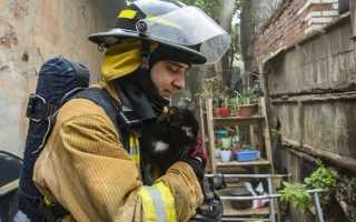 В Санкт-Петербурге загорелся приют для бездомных животных «Брошенный ангел», никто не пострадал