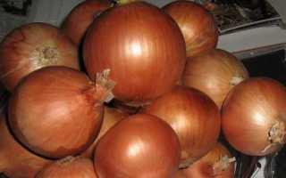 Выращивание лука Халцедон из семян в открытом грунте: посадка и уход