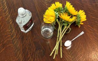 Польза водки для растений