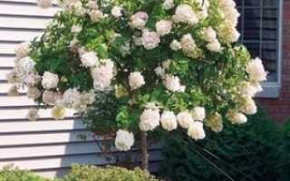 Мини-штамбы в саду: самые яркие штамбовые деревья, кустарники и лианы