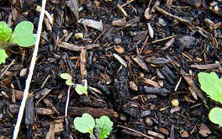 Выращивание репы и уход в открытом грунте в Подмосковье, на огороде под пленкой, дома и на даче в теплице