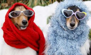 Как защитить от морозов собаку, которая зимует на даче