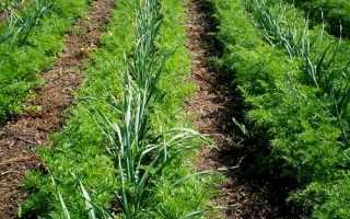 Совместные и смешанные посевы: мои рекомендации и советы