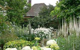 Монохромный цветник: оформление и подбор растений