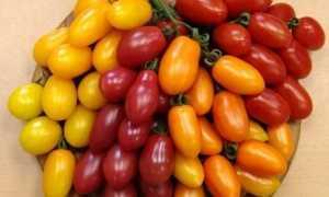 """Томат """"Финик Красный F1"""": описание и особенности выращивания сорта"""