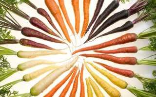 Схема защиты моркови от болезней и вредителей