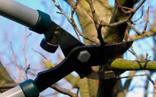 Осенняя обрезка плодовых деревьев и кустарников