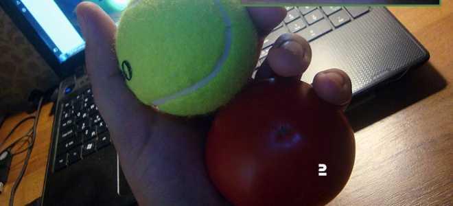 Вес помидора среднего размера
