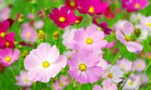 Цветы из нашего детства
