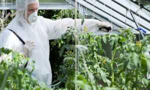 Препараты для томатов – Завязь, Тур и другие: их применение от вредителей, вытягивания рассады и для опыления помидоров в теплице