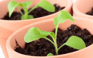 Земля для рассады петунии: как подготовить грунт своими руками, состав, кислотность, объем, какая почва лучше для петунии
