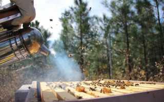 Защита пчел от клеща, что применить