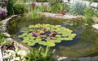 Растения для домашнего водного сада