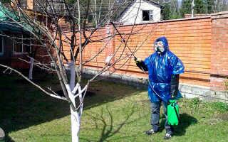 Болезни плодовых деревьев и их лечение с фото и видео