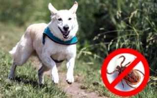 Ошейник от блох и клещей для собак килтикс: цена, правила применения, плюсы и минусы изделия