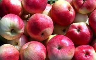 Яблоня карнавал