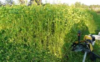Какую траву посадить, чтобы не росли сорняки: список