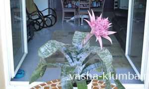 Комнатные растения – требования к уходу (таблица)