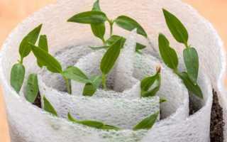 Посадка перца на рассаду в улитку: пошаговая инструкция по выращиванию