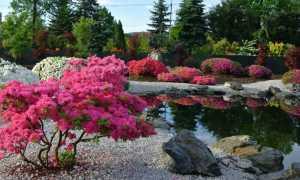 36 декоративных кустарников для сада с фото и названиями