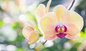 Легенды об орхидеях – Легенды о цветах, мифы и истории