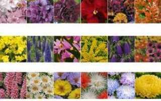Клумба из однолетников: посадка цветов и уход за клумбой
