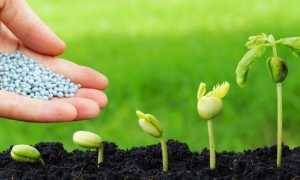 Агрофоска способ применения