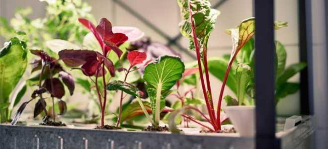 Выращивание растений без земли
