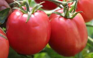 64 лучших сорта томатов на 2020 год: рейтинг с отзывами и фото