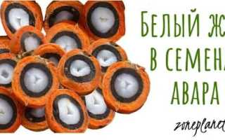 Пальма Авара (Astrocaryum vulgare): применение и лечебные свойства